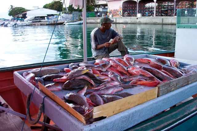 La Darse à Pointe-à-Pitre, Guadeloupe