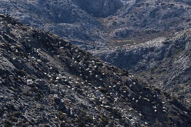 Sheep Mountains