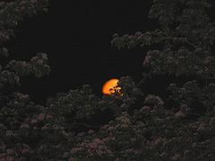 Moonlight-Freinacht in Bayern