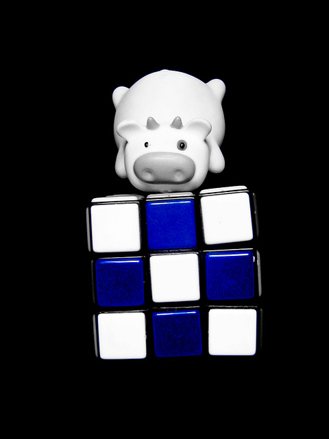 Moo and the blue cube