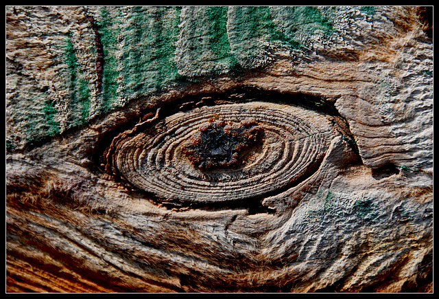 Wooden Eye - 2