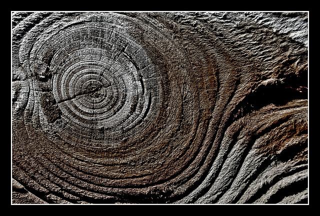Wood - 4