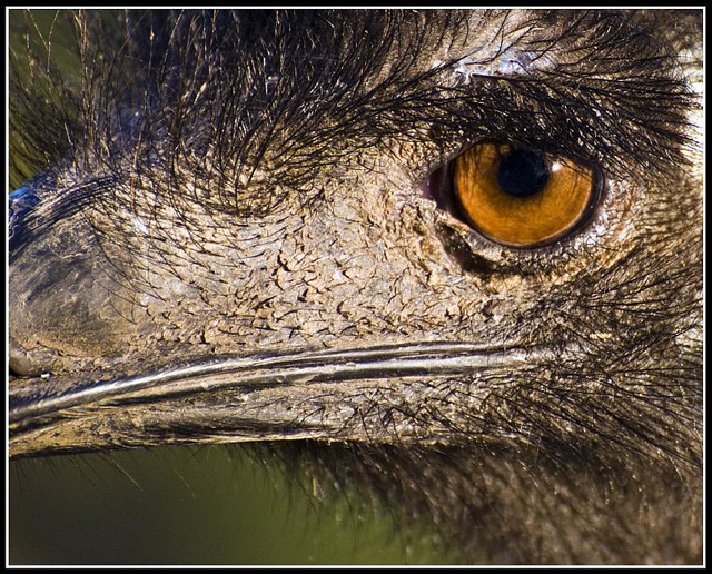 Ostrich - Marwell Zoo TalkPhotography Meet