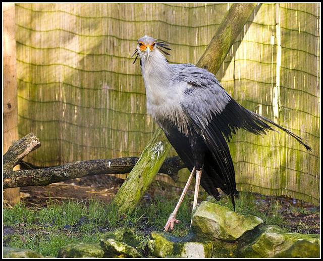 Secretary Bird - Marwell Zoo TalkPhotography Meet