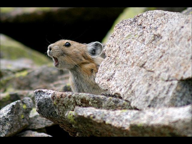 Henri Salvador chante : Minnie, petite souris