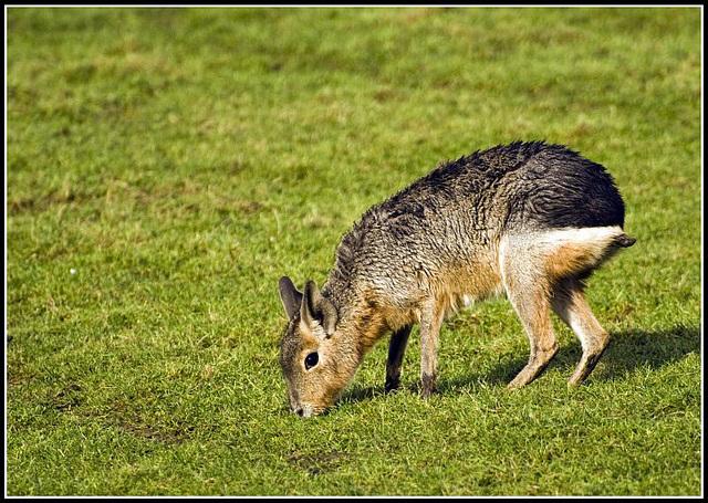 Mara Marwell Zoo Talkphotography Meet