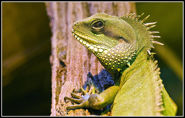 Green Dragon Marwell Zoo Talkphotography Meet