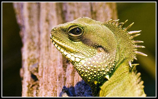 Green Dragon Marwell Zoo Talkphotography Meet
