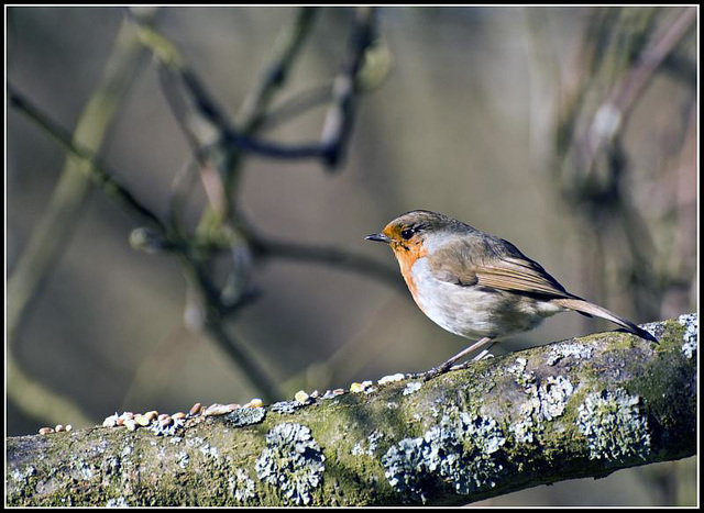 Robin at Whiteways Lodge