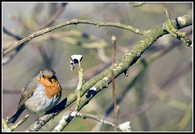 Robin at Whiteways Lodge