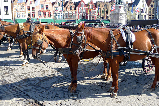 Bruges carriage horses 1