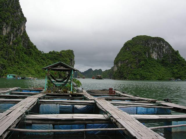 grüne Oase zwischen Fischbecken