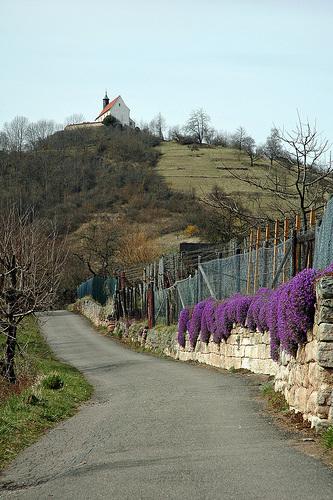 Kapelo de Wurmlingen