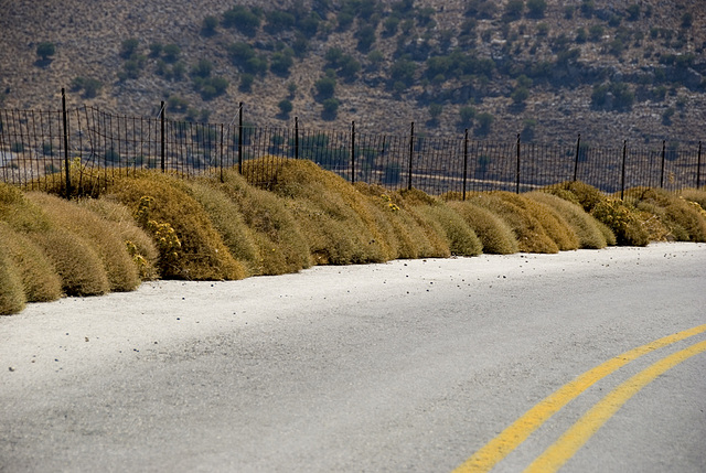 Natural fence protection...............