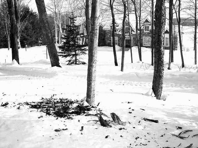 Carnage d'hiver / Winter slaughter.- En noir et blanc- B & W