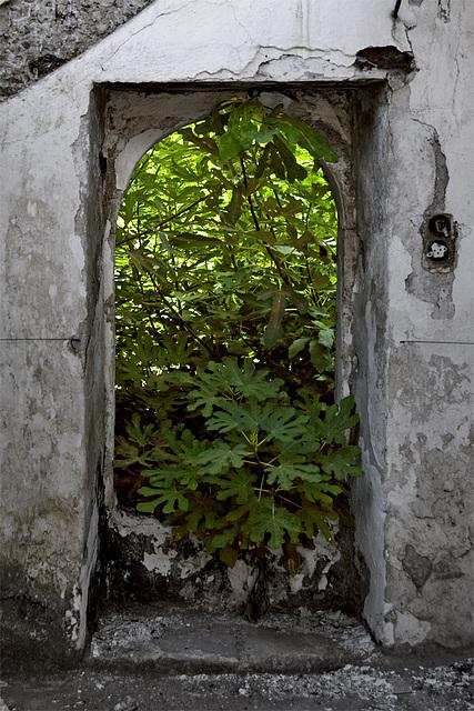 Door to the green jungle.....