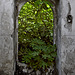 Door to the green jungle.....