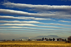 Zebra Sky