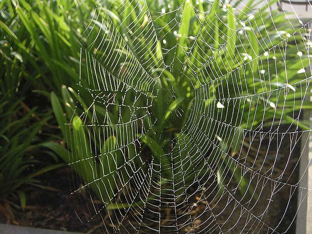 Pierre Perret chante : Le Poux et l'Araignée