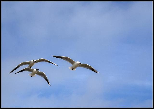 50mm_Gulls070309 (33)