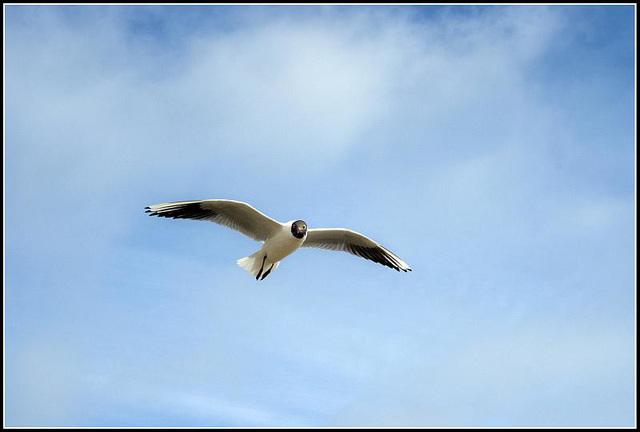 50mm_Gulls070309 (32)