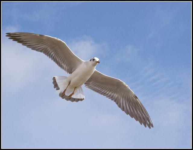 50mm_Gulls070309 (31)1