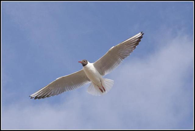 50mm_Gulls070309 (22)