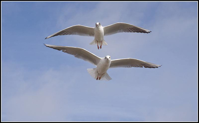 50mm_Gulls070309 (17)