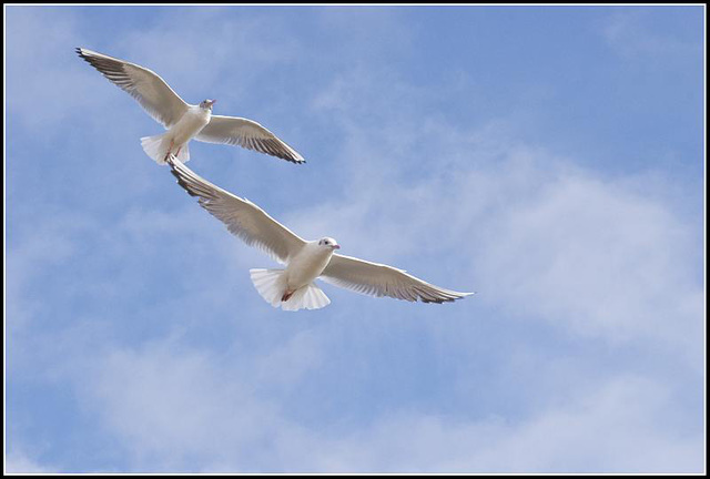 50mm_Gulls070309 (13)