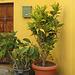 IMG 0283 Hauseingang in Calera