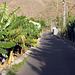 IMG 0374 Plantagenweg in Puntilla