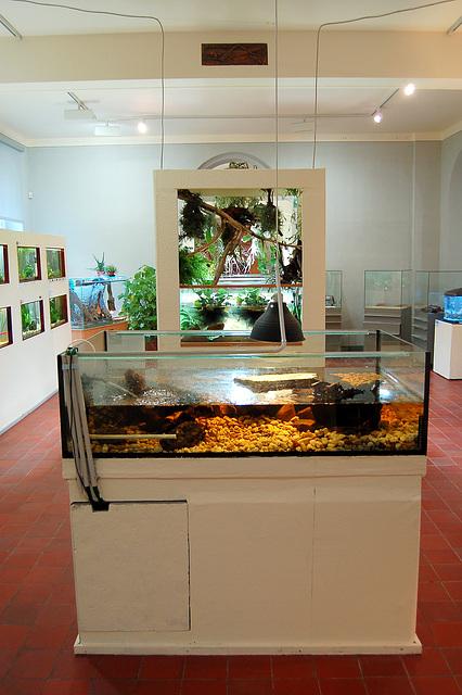 Akvariistoj prezentas sin (Altenburg, Mauritianum)