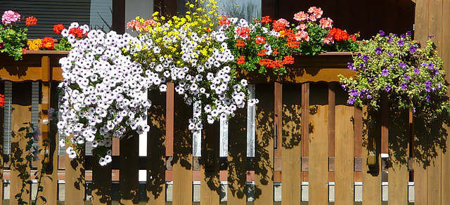 Ostrau - Rundgang - Häuser - Blumen - Bellevue