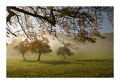 """dans un brouillard qui danse""..."