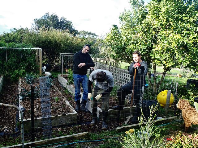 new vegie garden fence
