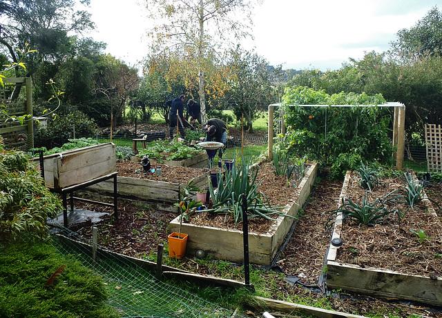 removing old vegie garden fence