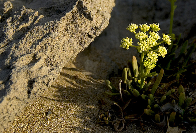 Green between sand and rocks