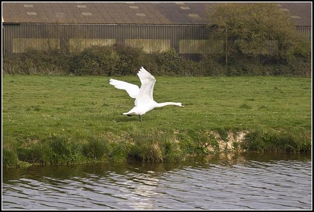 Get that goose 2