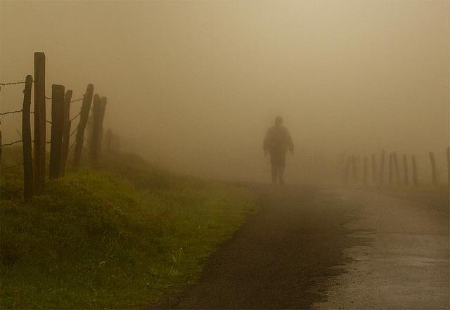 AUBRAC (berger dans la brume)