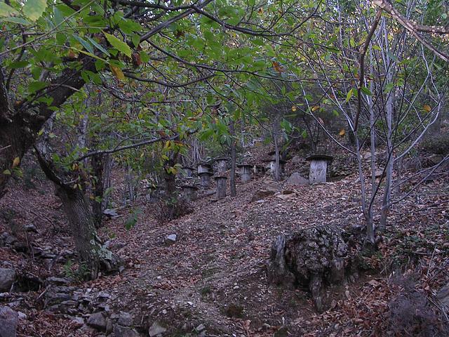 automne dans l'Hérault 045