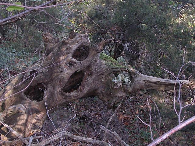 automne dans l'Hérault 2005 046