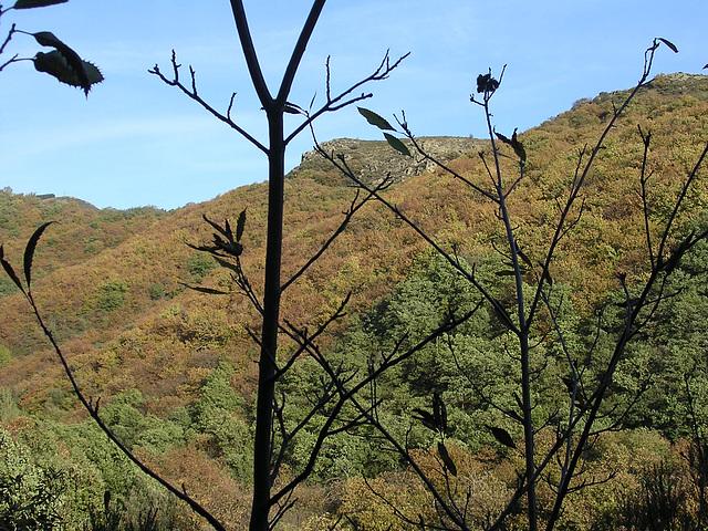 automne dans l'Hérault 2005 050
