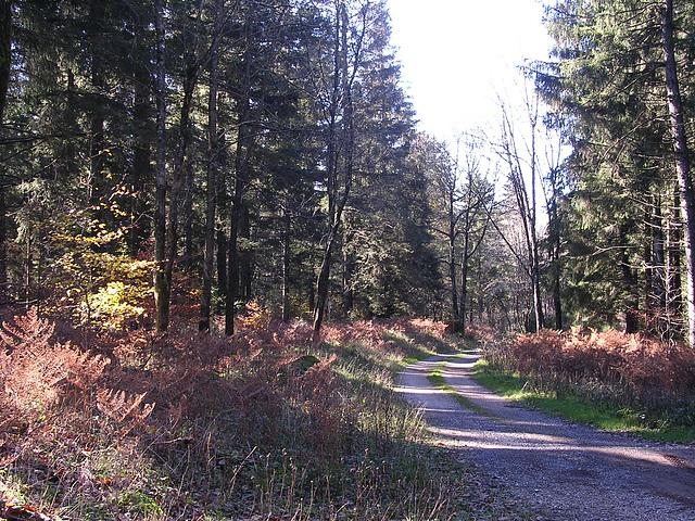 automne dans l'Hérault 2005 053