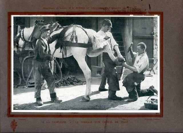 ile ferrage d'un cheval de trait à la campagne 1907