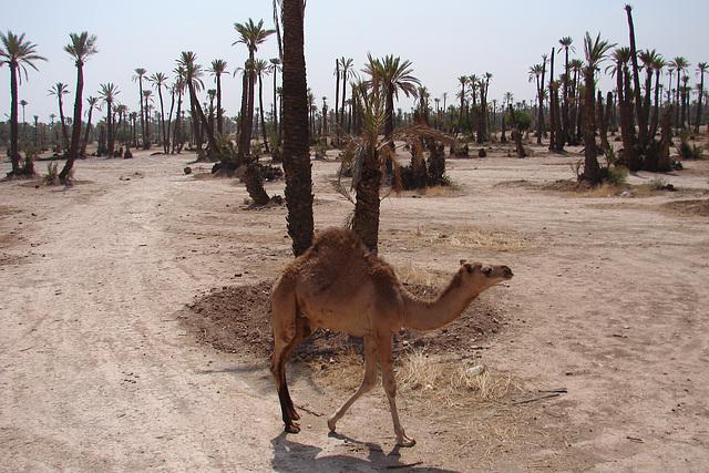 Maroc 2008 131