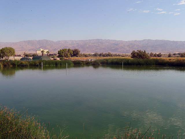 Coachella Valley Wild Bird Center (1467)