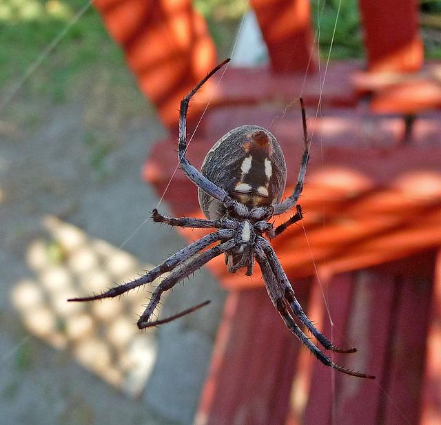 Spider (1420)