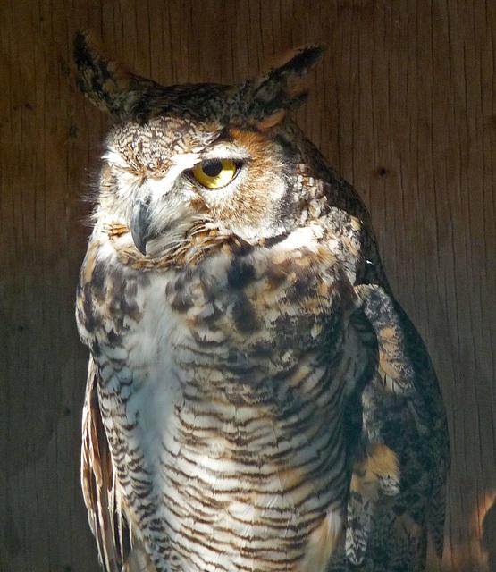 Owl (1424)