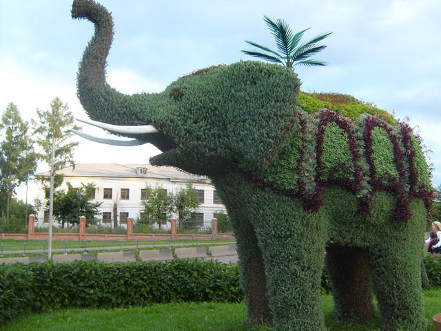 flora elefanto