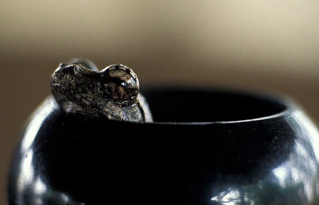 Frog in a Pepperpot